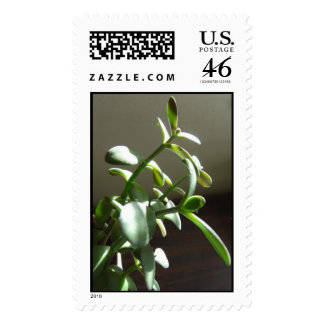Jade Plant Stamp