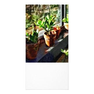 Jade Plants in Greenhouse Card