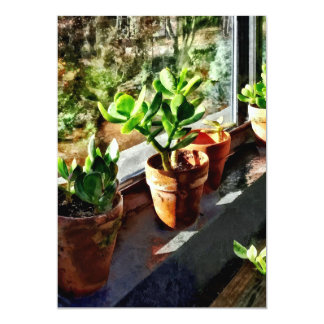 Jade Plants in Greenhouse Card