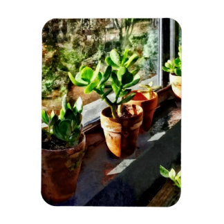 Jade Plants in Greenhouse Magnet