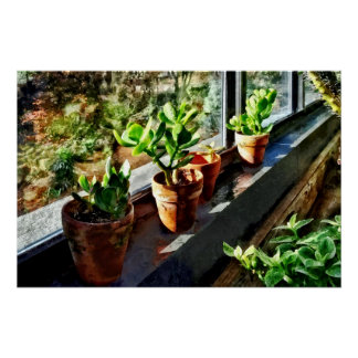 Jade Plants in Greenhouse Poster