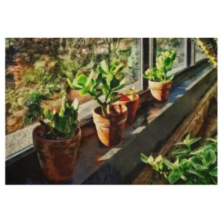 Jade Plants in Greenhouse Wood Poster
