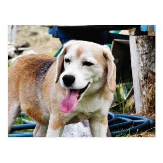Jadeo de la piel de las lenguas de los beagles de tarjeta postal