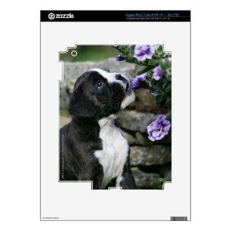 Jadeo del perro del boxeador pegatinas skins para iPad 3