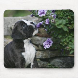 Jadeo del perro del boxeador tapete de raton