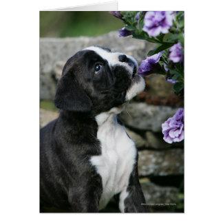 Jadeo del perro del boxeador tarjeta de felicitación