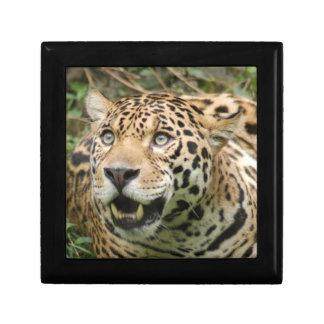 jaguar10x10 joyero cuadrado pequeño