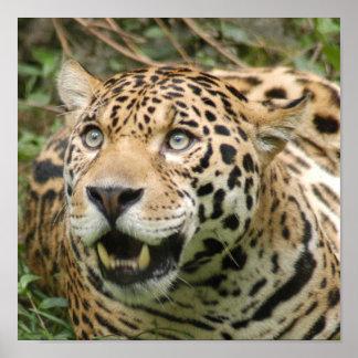 jaguar10x10 impresiones