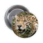 jaguar10x10 pins