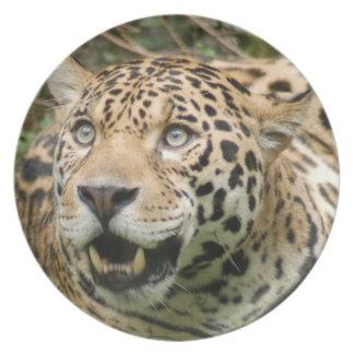 jaguar10x10 plato de comida