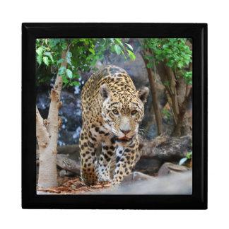 Jaguar20150501 Gift Box