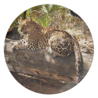 Jaguar 0481 platos