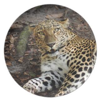 Jaguar 0940 platos de comidas