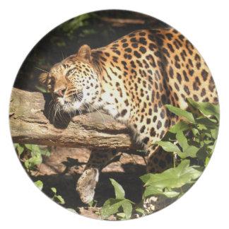 Jaguar 0956 plato