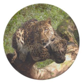Jaguar 1012 plato para fiesta
