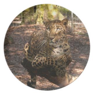 Jaguar 1016 plato de comida