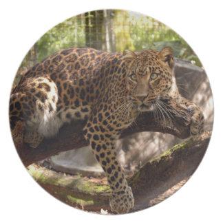 Jaguar 1026 platos de comidas