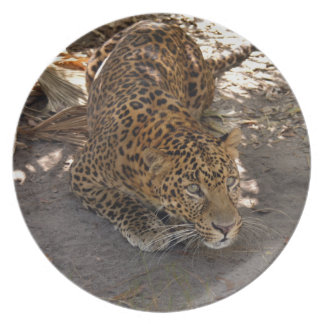 Jaguar 1042 plato para fiesta