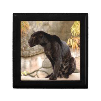jaguar-10 cajas de regalo