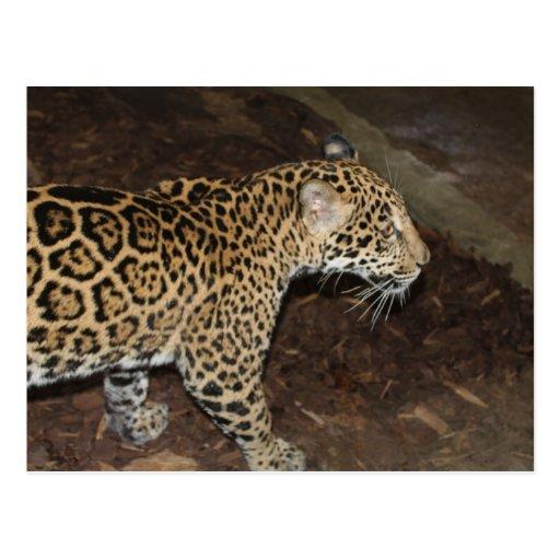 Jaguar # 17 post card