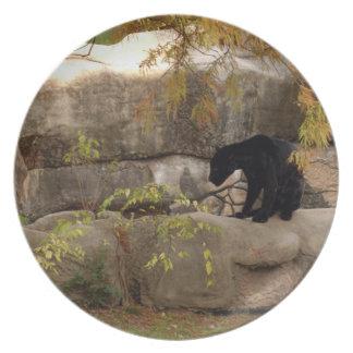 jaguar-1 plato de cena