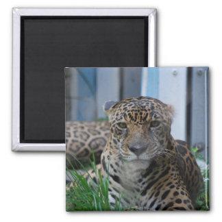 Jaguar 2 Inch Square Magnet