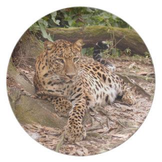 Jaguar 3403 plato de cena