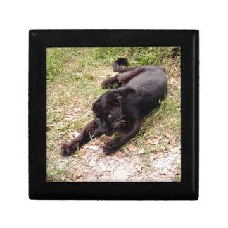 Jaguar 3515 cajas de recuerdo