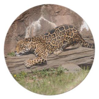 jaguar-3 plato de cena
