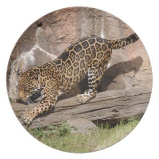 jaguar-4 plato para fiesta