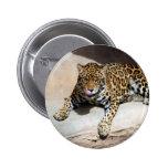jaguar-5 pin