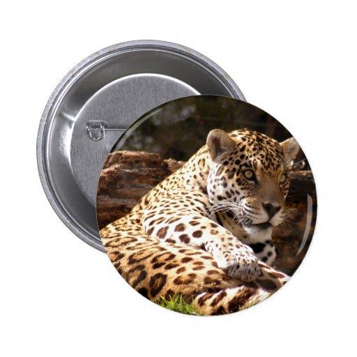 jaguar-6 pins