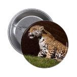 jaguar-7 pin