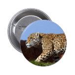 jaguar-8 pin