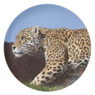 jaguar-8 plato para fiesta