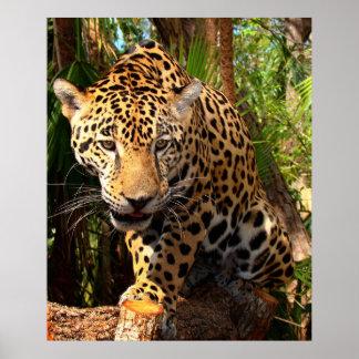 Jaguar Adolescent Poster