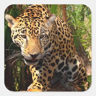Jaguar Adolescent Sticker