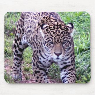 Jaguar Africa Jungle Safari Nature Peace Destiny Mousepad