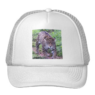 Jaguar Africa Jungle Safari Nature Peace Destiny Trucker Hat