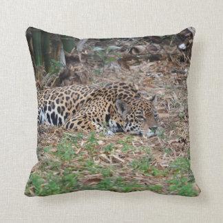 jaguar agujereado de la Florida que miente abajo Cojín