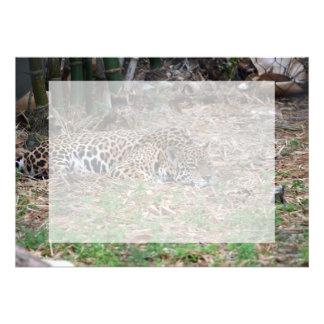jaguar agujereado de la Florida que miente abajo g Invitacion Personalizada