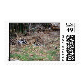 jaguar agujereado de la Florida que miente abajo g Sello