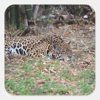 jaguar agujereado de la Florida que miente abajo Calcomanías Cuadradas Personalizadas