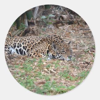 jaguar agujereado de la Florida que miente abajo Pegatinas Redondas
