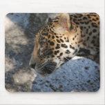 Jaguar Alfombrillas De Ratones