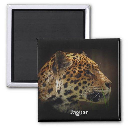 Jaguar, Big Cat, Animal-Lover Magnet