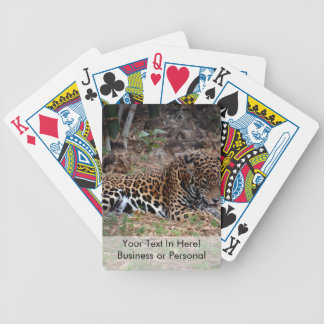 jaguar big cat licking paws cool animal photo bicycle playing cards