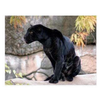 Jaguar black4x6 tarjetas postales