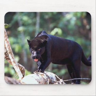 Jaguar, black-phase (Panthera onca) Mouse Pad