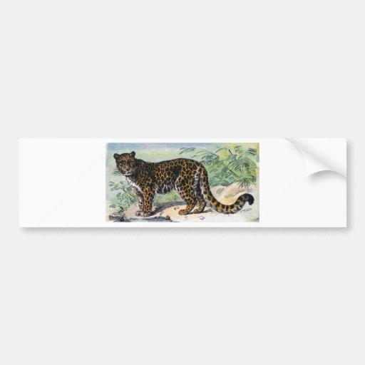 Jaguar Bumper Stickers